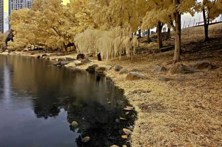 ir: Infrared photo � lake, rock, and tree in the parks