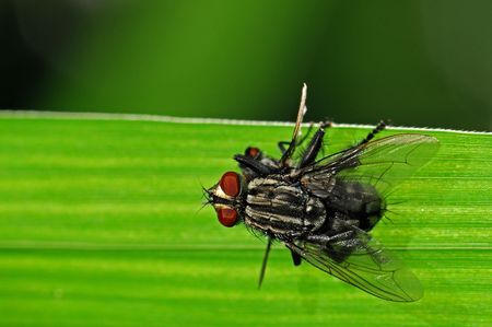 housefly: housefly mating in the parks