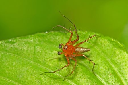 eight legs: red spider in the parks Stock Photo