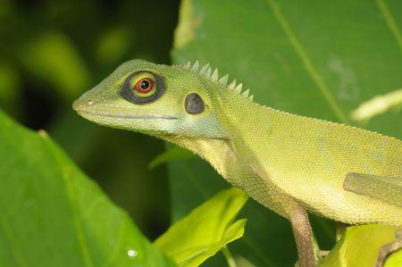 lizard in field: lagarto verde en los parques