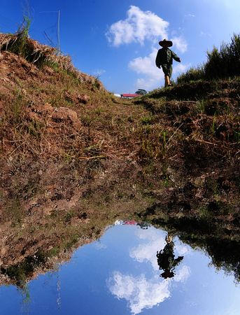 paddy field: drain and farmer in the paddy field Stock Photo