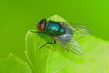 housefly in the parks