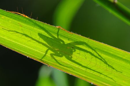 spider and shadows photo