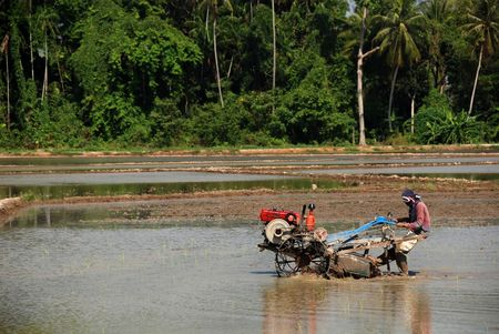 plough machine: coconut tree and plough machine in the paddy field