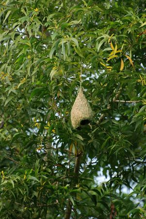 weaver bird nest in the parks photo