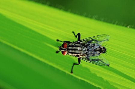 housefly in the parks photo