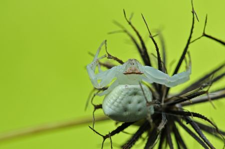 eight legs: crab spider in the parks Stock Photo