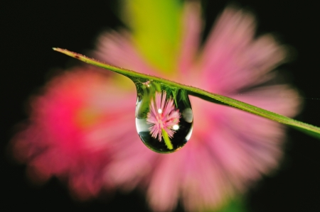 within: water droplet with flower inside