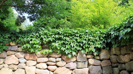 Stone Wall With Green Leaves And Bamboo Stock Photo