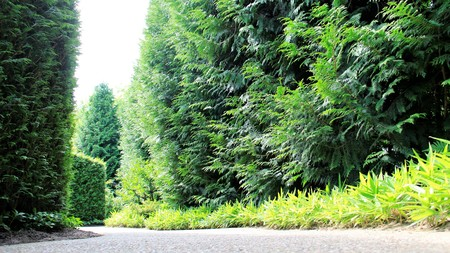 shrubbery: Green Park Walkway With Mini Bamboo And Fresh Air