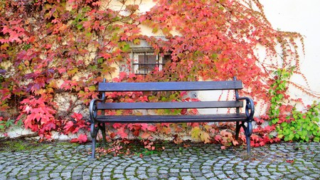 Un banc avec des feuilles de vigne colorées en automne dans l'île de Reichenau.Allemagne Banque d'images - 88093674