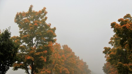 Morning  misty with leaves in autumn