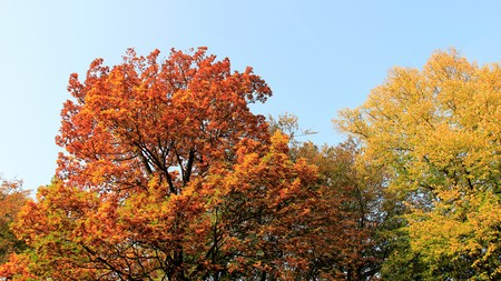 Differen And Colorful Of Autumn Leaves With Clear Sky Stock Photo