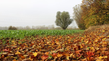 Colorful of autumn leaves with green salad field in misty day. Berlin suburb germany