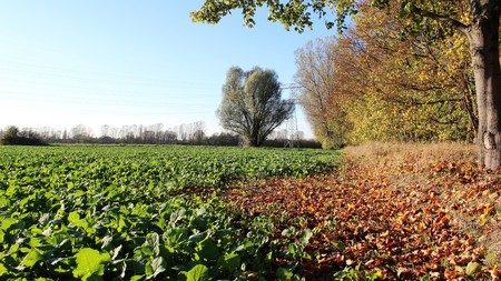 Organig salad farm  with autumn leaves in Germany Stock Photo