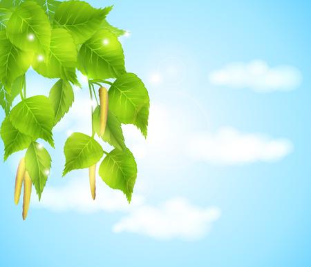 Bloeiende takken van berkbomen - de lenteachtergrond