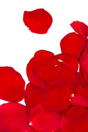 rode rozenblaadjes op witte achtergrond