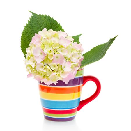hortensia bloemen in cup geïsoleerd op wit