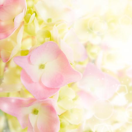 hortensia bloeit de achtergrond