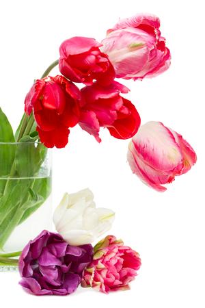 boeket van rode tulpen in een vaas op een witte achtergrond Stockfoto