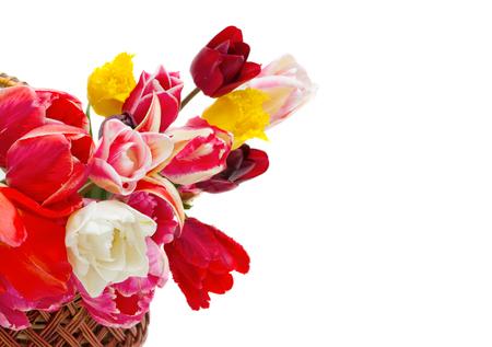 mooie tulpen van verschillende rassen in een mand geïsoleerd op een witte achtergrond Stockfoto