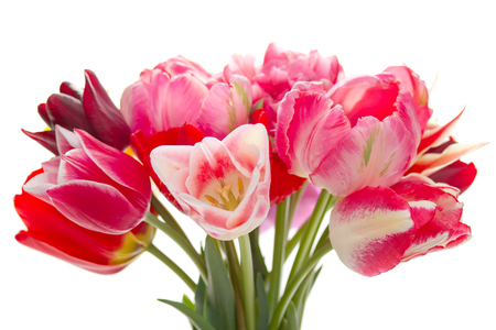 boeket van mooie tulpen op een witte achtergrond