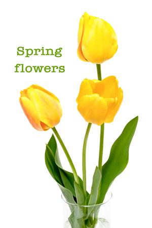 De lenteboeket van gele die tulpen op de witte achtergrond worden geïsoleerd.