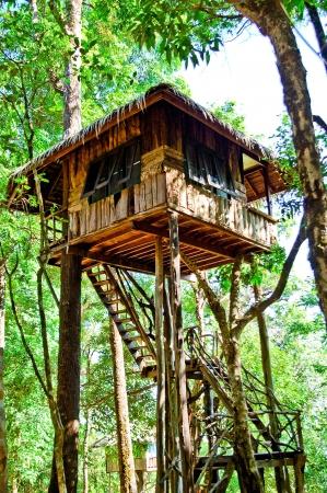 tree House photo