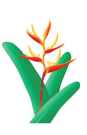 strelitzia: Bird of Paradise flower