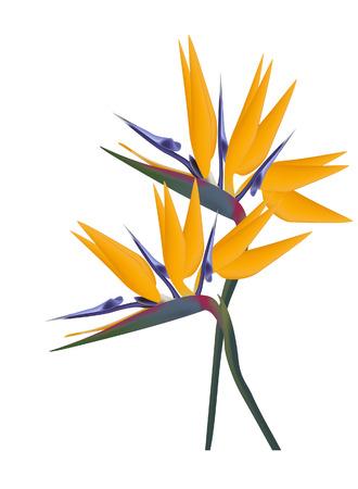 birds of paradise: Bird of Paradise flower