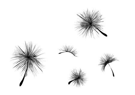 blown: Vector dandelion seeds blown in the wind Illustration
