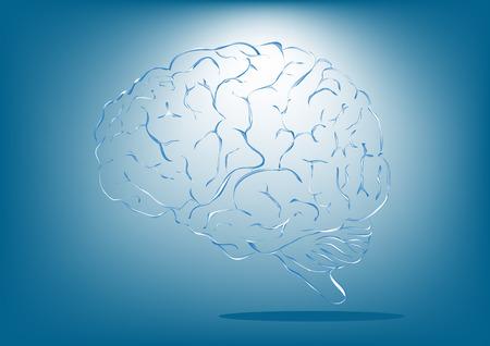 brain illustration: vector illustration of brain designs