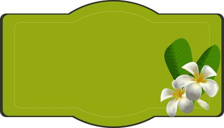 plumeria flower: Plumeria Flower label Illustration