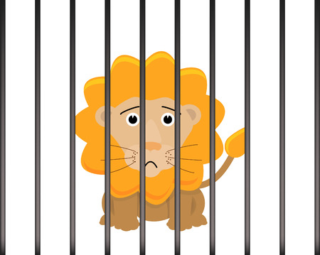 caged: Lion in a cage