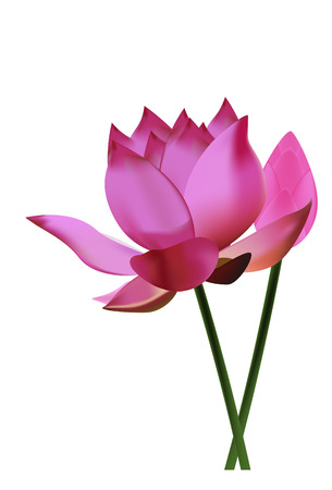 lily pads: lotus
