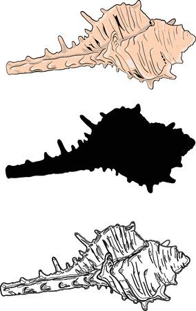 대양의: 조개 일러스트