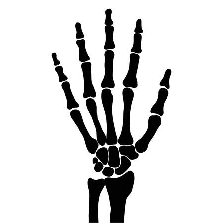 esqueleto: hueso de la mano