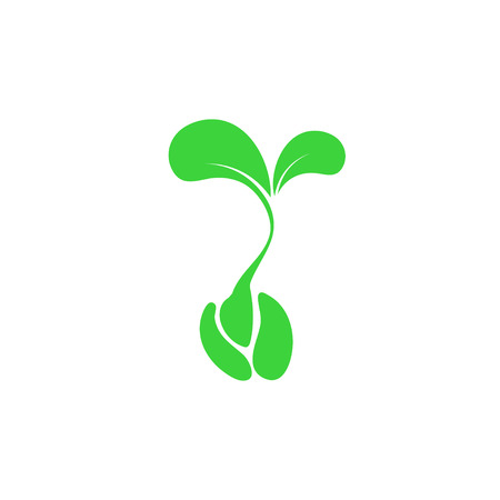 the sprouting: tree sprout from seeds