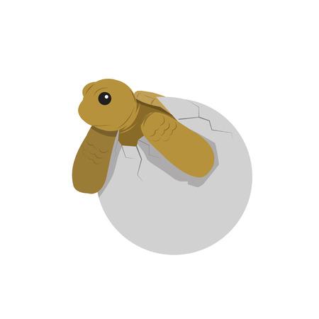 baby turtle: baby turtle vector