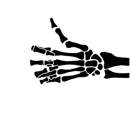 human hand: hand bones Illustration
