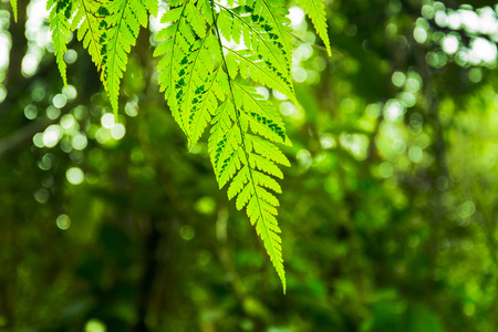 beautyful: Beautyful ferns leaves green foliage natural floral Stock Photo