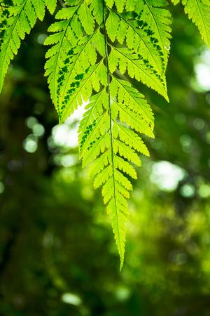 helechos: Beautyful ferns leaves green foliage natural floral Foto de archivo