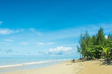 mamma: Pine at cape sea waters Around
