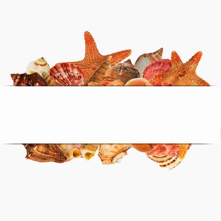 star fish: shellfish  design  for label on white background