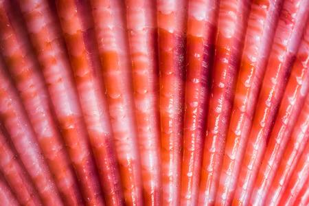 sea shell or shell fish  close up Stock Photo
