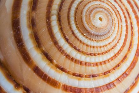 shell fish: sea shell or shell fish  close up Stock Photo