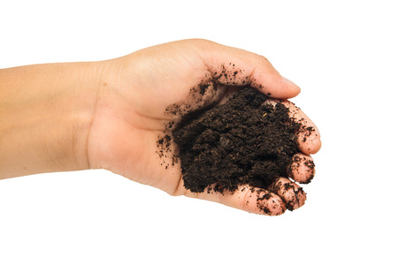forestation: soil  in hands on white background. Stock Photo