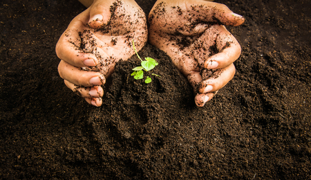 earth handful: Small tree with Hands and soil  , soil background