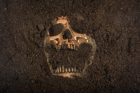 background csi: skull buried in the ground