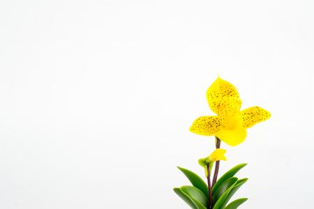 dollhouse: ORCHID Flower Plant in Pot Dollhouse Miniatures Garden Stock Photo